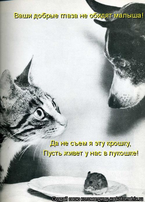 Котоматрица: Ваши добрые глаза не обидят малыша! Да не съем я эту крошку, Пусть живет у нас в лукошке!