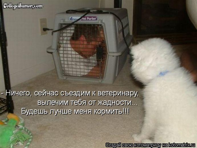Котоматрица: - Ничего, сейчас съездим к ветеринару,  вылечим тебя от жадности... Будешь лучше меня кормить!!!