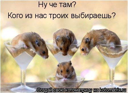 Котоматрица: Ну че там? Кого из нас троих выбираешь?