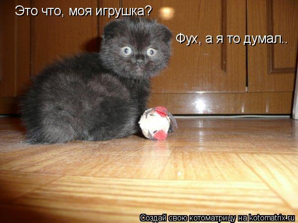 Котоматрица: Это что, моя игрушка?  Фух, а я то думал..