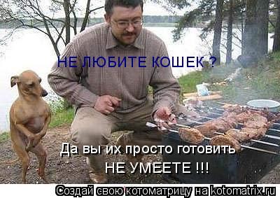 Котоматрица: НЕ ЛЮБИТЕ КОШЕК ? Да вы их просто готовить  НЕ УМЕЕТЕ !!!