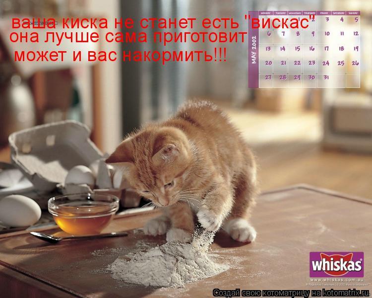 """Котоматрица: ваша киска не станет есть """"вискас"""" она лучше сама приготовит может и вас накормить!!!"""