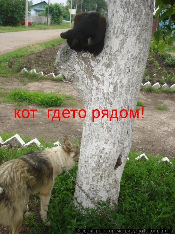 Котоматрица: кот  гдето рядом!