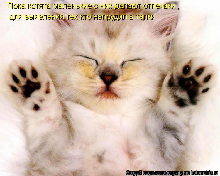 Котоматрица: Пока котята маленькие с них делают отпечаки , для выявления тех,кто напрудил в тапки