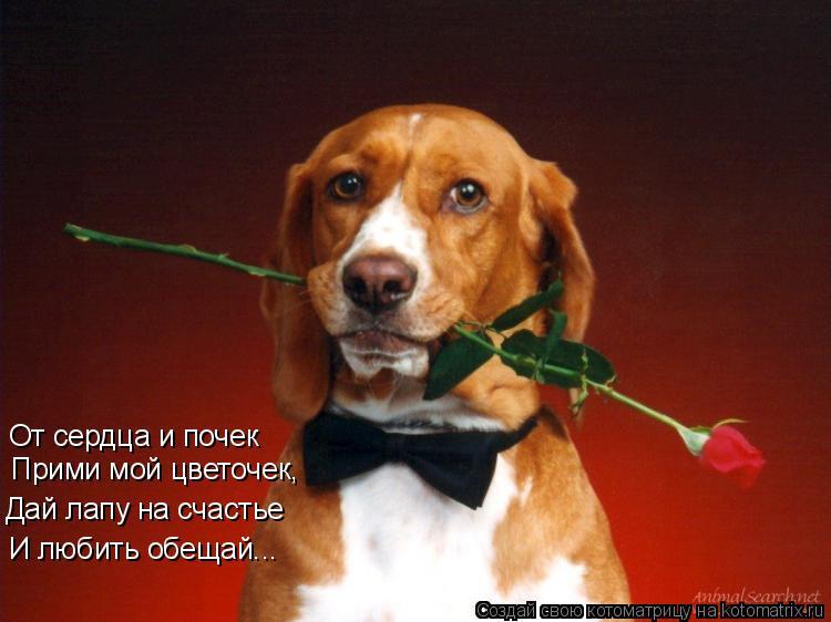 Котоматрица: От сердца и почек Прими мой цветочек, Дай лапу на счастье И любить обещай...