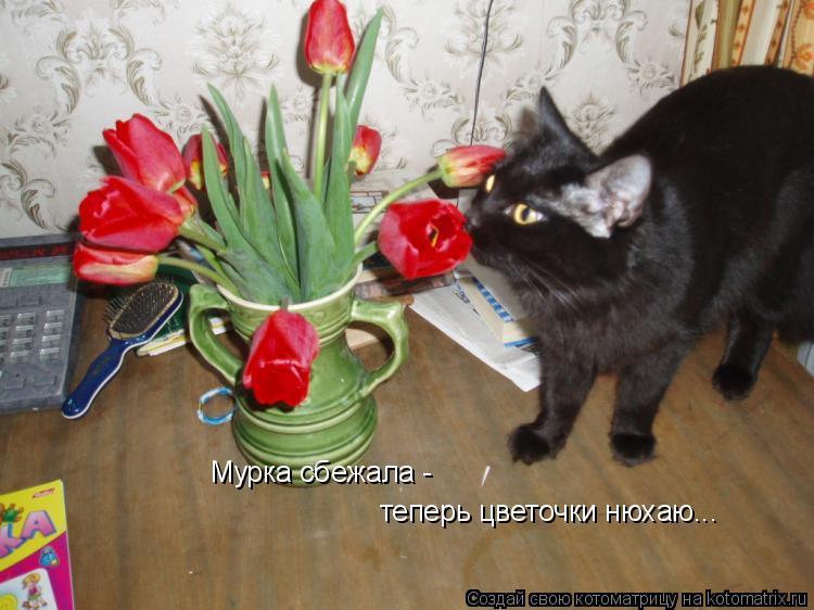 Котоматрица: Мурка сбежала -  теперь цветочки нюхаю...