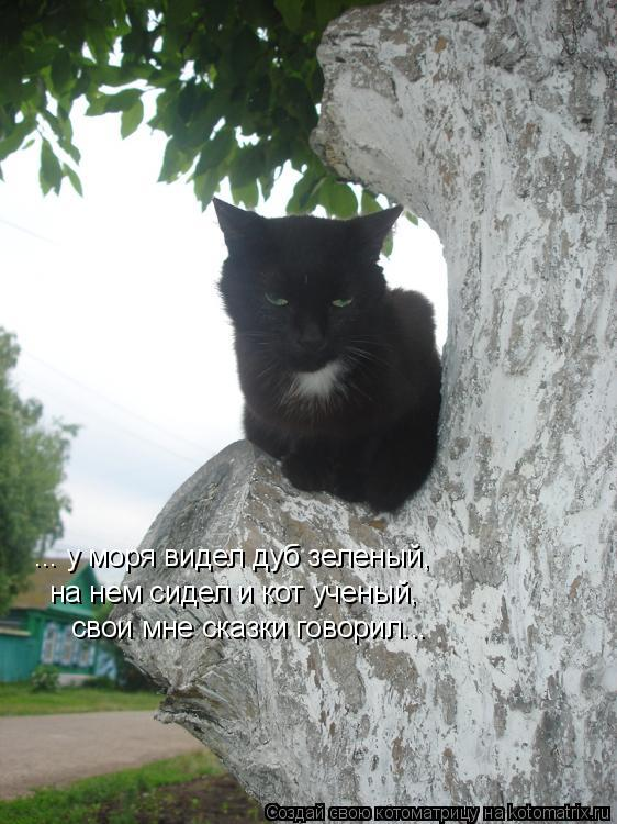 Котоматрица: ... у моря видел дуб зеленый, на нем сидел и кот ученый, свои мне сказки говорил...