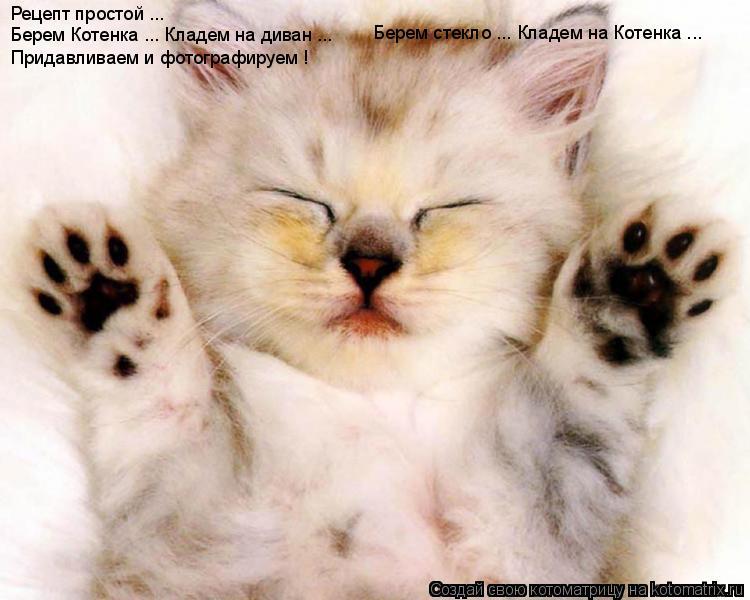 Котоматрица: Рецепт простой ...  Берем Котенка ... Кладем на диван ... Берем стекло ... Кладем на Котенка ... Придавливаем и фотографируем !