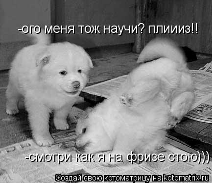 Котоматрица: -смотри как я на фризе стою))) -ого меня тож научи? плиииз!!