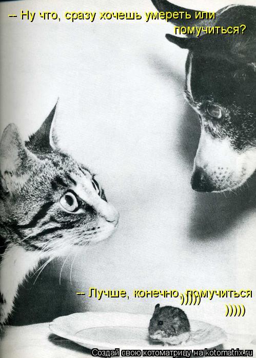 Котоматрица: -- Ну что, сразу хочешь умереть или  помучиться?      -- Лучше, конечно, помучиться ))))) )))))