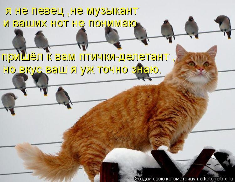 Котоматрица: я не певец ,не музыкант  и ваших нот не понимаю пришёл к вам птички-делeтант , но вкус ваш я уж точно знаю.