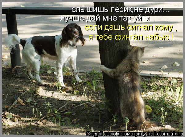 Котоматрица: слышишь пёсик,не дури... лучше дай мне так уйти . если дашь сигнал кому , я тебе фингал набью !
