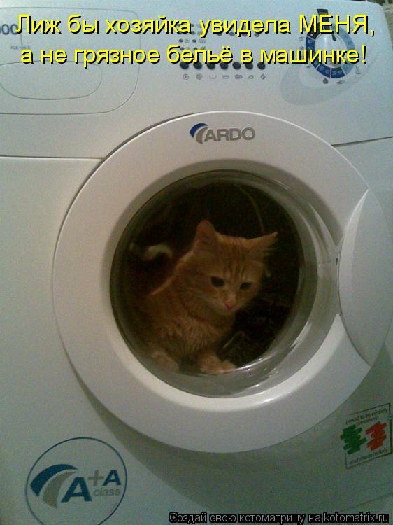 Котоматрица: Лиж бы хозяйка увидела МЕНЯ, а не грязное бельё в машинке!