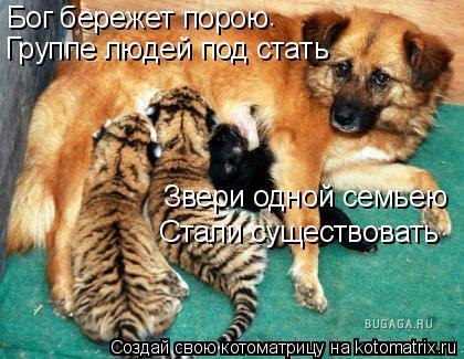 Котоматрица: Бог бережет порою . Группе людей под стать Звери одной семьею Стали существовать