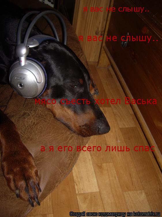 Котоматрица: я вас не слышу.. я вас не слышу.. мясо съесть хотел Васька а я его всего лишь спас