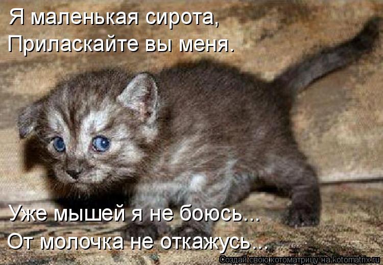 Котоматрица: Я маленькая сирота, Приласкайте вы меня. Уже мышей я не боюсь... От молочка не откажусь...