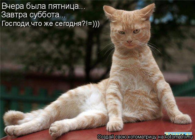 Котоматрица: Вчера была пятница... Завтра суббота... Господи,что же сегодня?!=)))