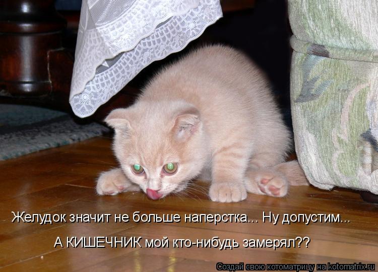Котоматрица: Желудок значит не больше наперстка... Ну допустим... А КИШЕЧНИК мой кто-нибудь замерял??
