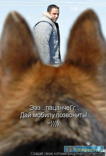 Котоматрица: Эээ...пацанчеГг... Дай мобилу позвонить!... =))))