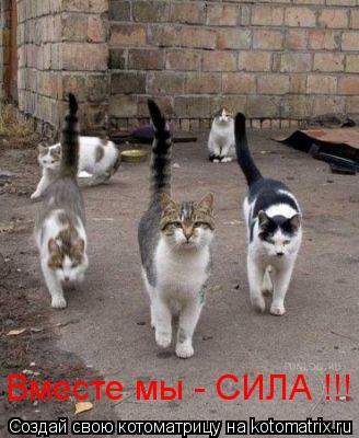 Котоматрица: Вместе мы - СИЛА !!!