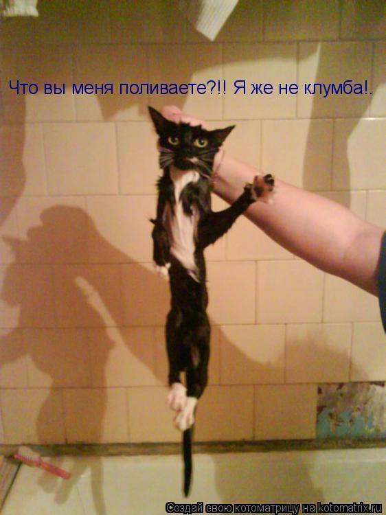 Котоматрица: Что вы меня поливаете?!! Я же не клумба!.