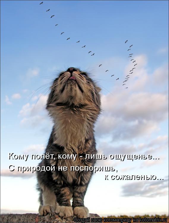 Котоматрица: Кому полёт, кому - лишь ощущенье... С природой не поспоришь, к сожаленью...