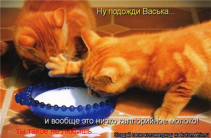 Котоматрица: Ну подожди Васька... Ну подожди Васька... и вообще это низко каллорийное молоко! ты такое не любишь...