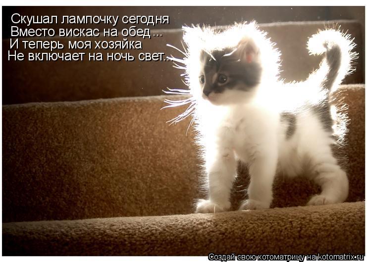 Котоматрица: Скушал лампочку сегодня Вместо вискас на обед ... И теперь моя хозяйка  Не включает на ночь свет...