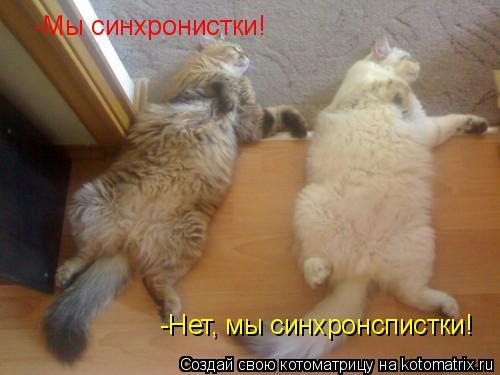 Котоматрица: -Мы синхронистки! -Нет, мы синхронспистки!