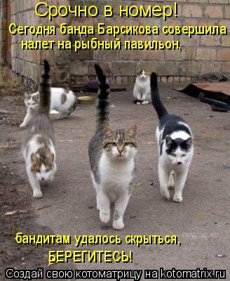 Котоматрица: Срочно в номер! Сегодня банда Барсикова совершила налет на рыбный павильон,  бандитам удалось скрыться,  БЕРЕГИТЕСЬ!