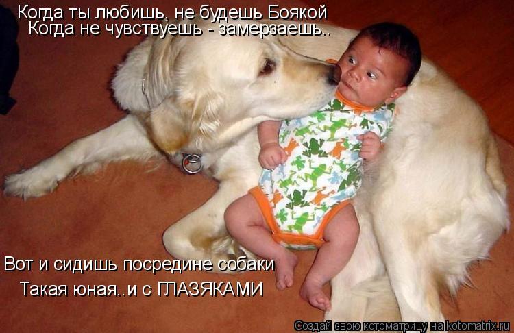 Котоматрица: Когда ты любишь, не будешь Боякой Когда не чувствуешь - замерзаешь.. Вот и сидишь посредине собаки Такая юная..и с ГЛАЗЯКАМИ