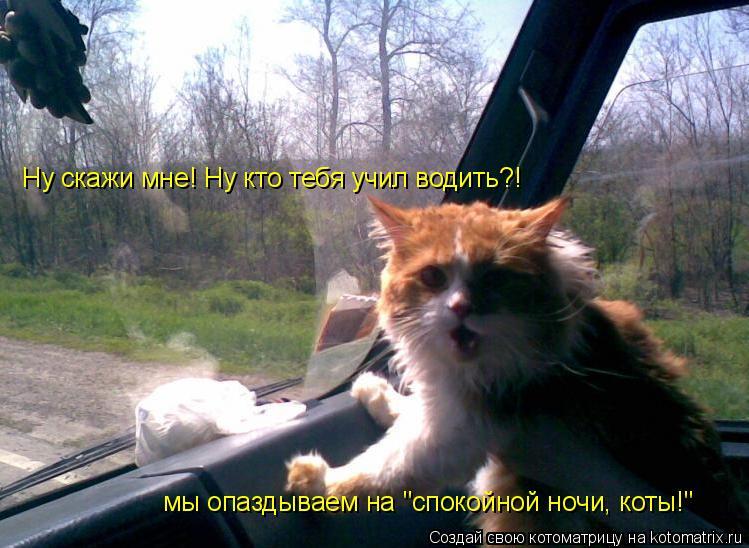 """Котоматрица: Ну скажи мне! Ну кто тебя учил водить?!  мы опаздываем на """"спокойной ночи, коты!"""""""