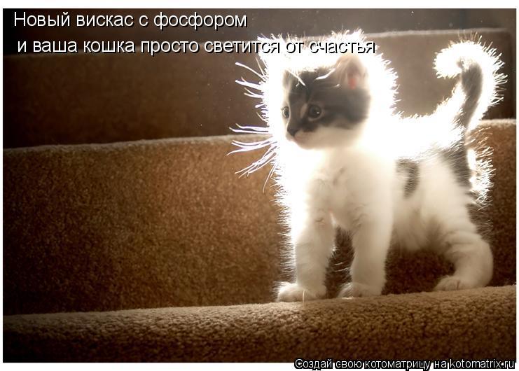 Котоматрица: Новый вискас с фосфором и ваша кошка просто светится от счастья