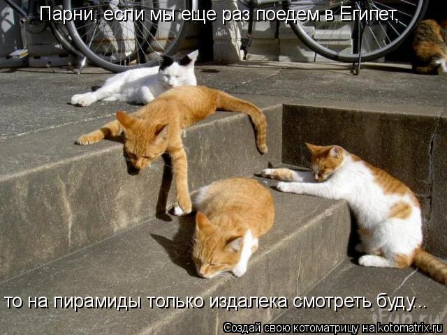 Котоматрица: Парни, если мы еще раз поедем в Египет,  то на пирамиды только издалека смотреть буду...