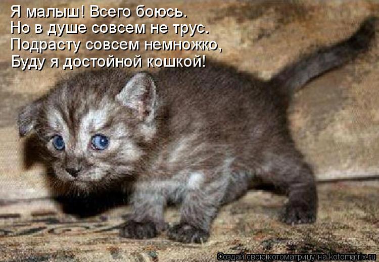 Котоматрица: Я малыш! Всего боюсь… Но в душе совсем не трус. Подрасту совсем немножко, Буду я достойной кошкой!