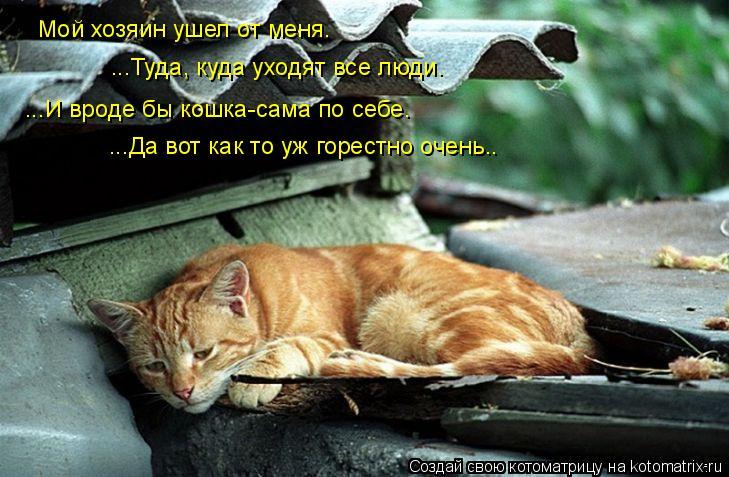 Котоматрица: Мой хозяин ушел от меня… ...Туда, куда уходят все люди…  ...И вроде бы кошка-сама по себе… ...Да вот как то уж горестно очень..