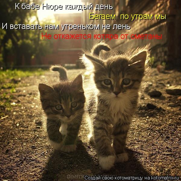 Котоматрица: Бегаем  по утрам мы И вставать нам утреньком не лень Не откажется котяра от сметаны К бабе Нюре каждый день