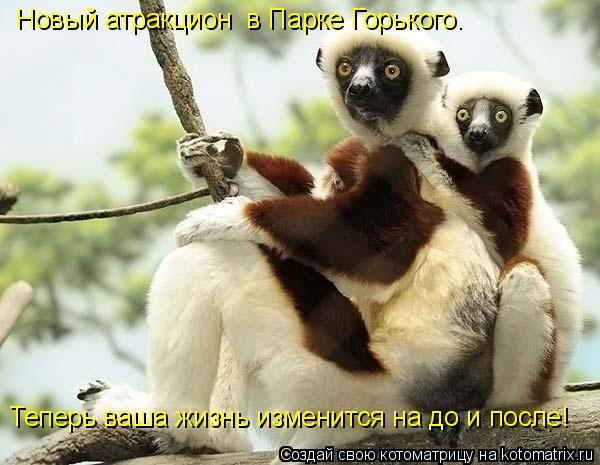 Котоматрица: Новый атракцион  в Парке Горького.  Теперь ваша жизнь изменится на до и после!
