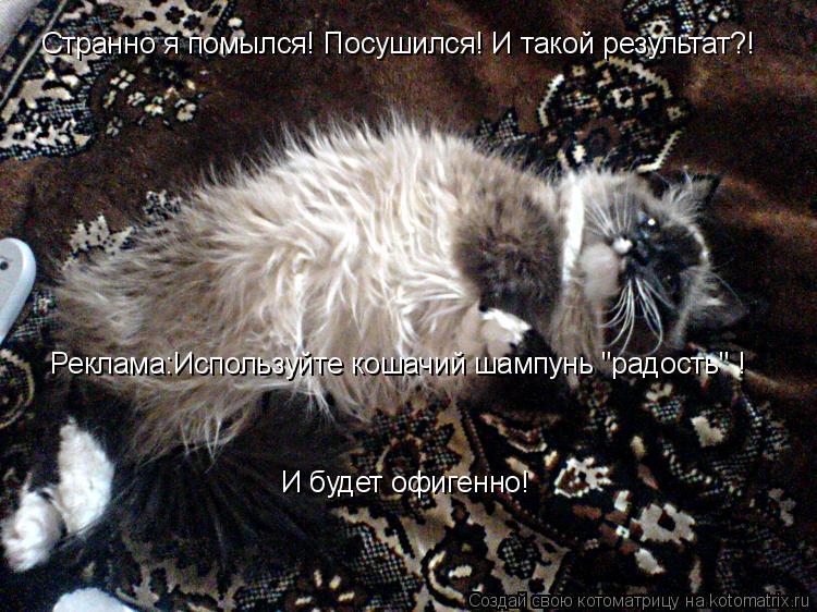 """Котоматрица: Странно я помылся! Посушился! И такой результат?! Реклама:Используйте кошачий шампунь """"радость"""" ! И будет офигенно!"""