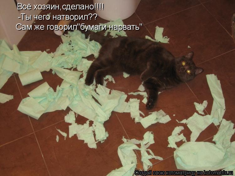 """Котоматрица: Всё хозяин,сделано!!!! -Ты чего натворил?? Сам же говорил""""бумаги нарвать"""""""