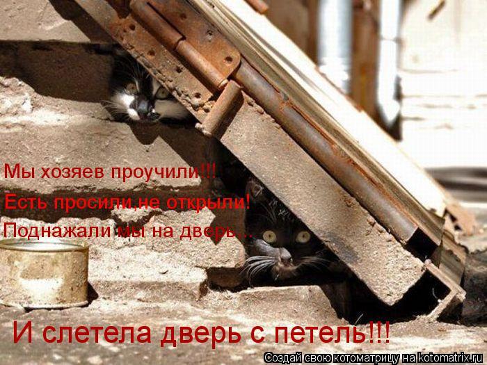 Котоматрица: Мы хозяев проучили!!! Есть просили,не открыли! Поднажали мы на дверь...  И слетела дверь с петель!!!
