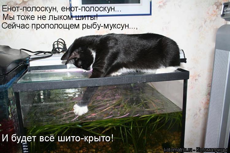 Котоматрица: Енот-полоскун, енот-полоскун... Мы тоже не лыком шиты! И будет всё шито-крыто! Сейчас прополощем рыбу-муксун...,