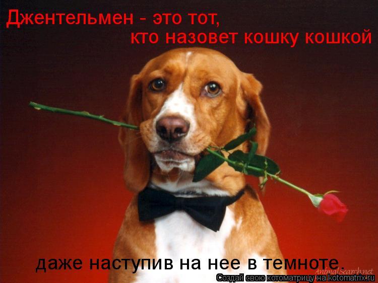 Котоматрица: Джентельмен - это тот,  кто назовет кошку кошкой  даже наступив на нее в темноте.