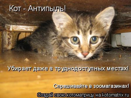 Котоматрица: Кот - Антипыль! Убирает даже в труднодоступных местах! Спрашивайте в зоомагазинах!