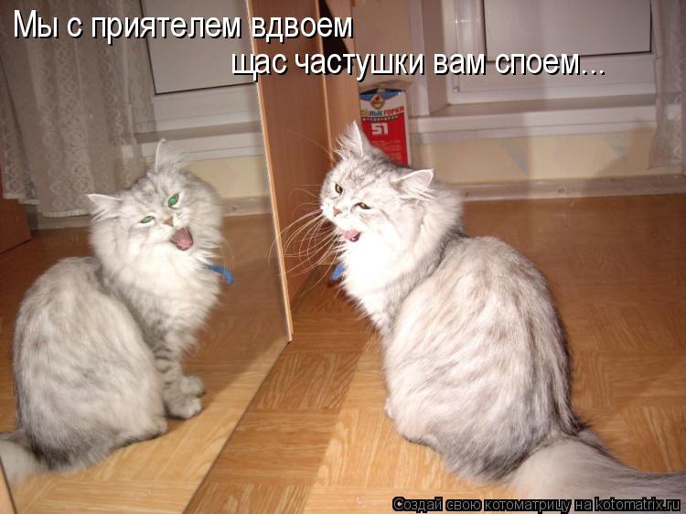 Котоматрица: Мы с приятелем вдвоем щас частушки вам споем...