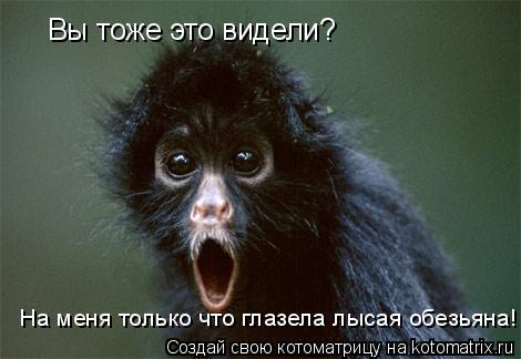 Котоматрица: Вы тоже это видели? На меня только что глазела лысая обезьяна!