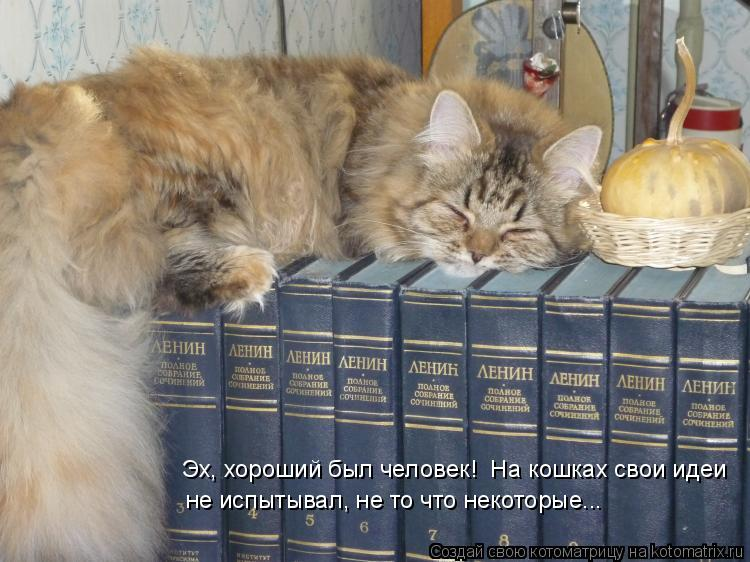 Котоматрица: Эх, хороший был человек!  На кошках свои идеи не испытывал, не то что некоторые...