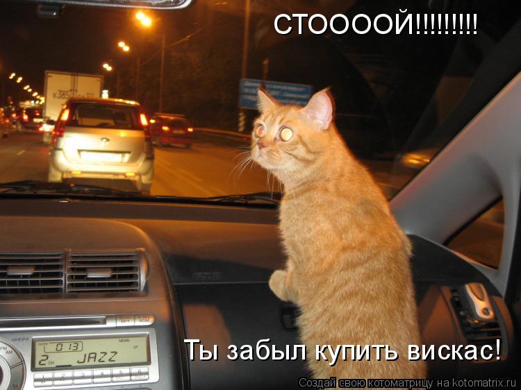 Котоматрица: СТООООЙ!!!!!!!!! Ты забыл купить вискас!