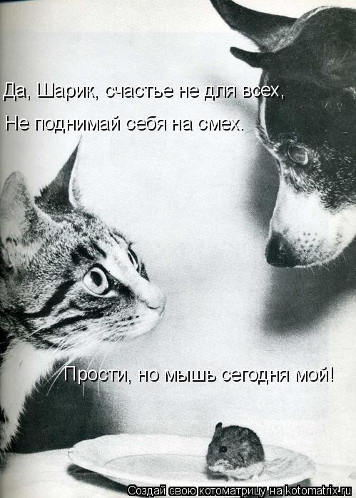 Котоматрица: Да, Шарик, счастье не для всех, Прости, но мышь сегодня мой! Не поднимай себя на смех.