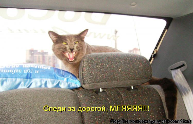 Котоматрица: Следи за дорогой, МЛЯЯЯЯ!!!
